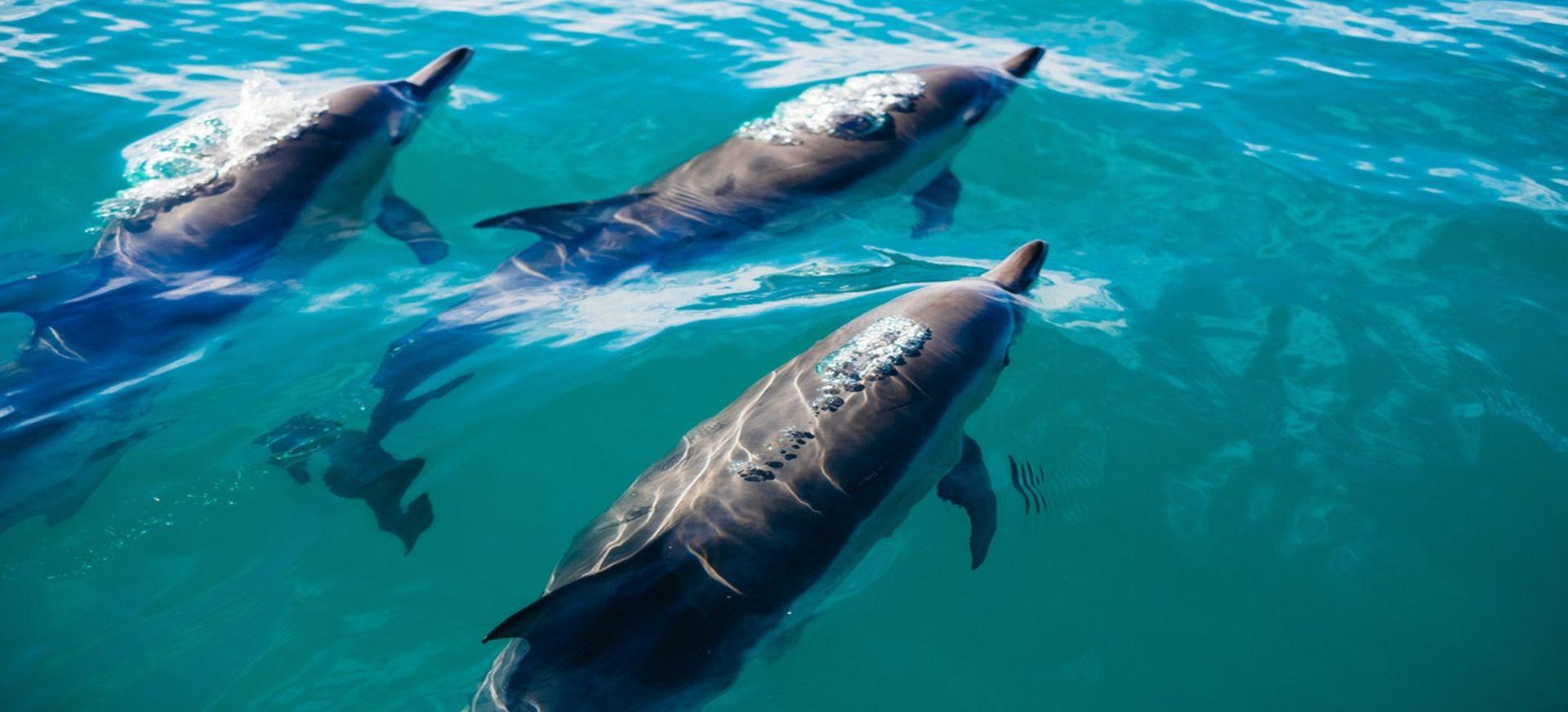Dolfijnen en yoga